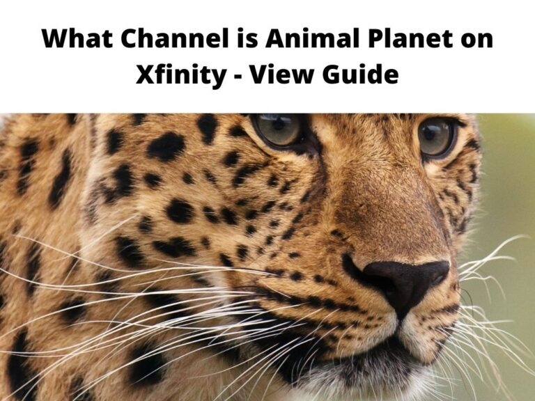 What Channel is Animal Planet on Xfinity